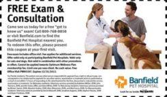 Free Pet Exam Coupon