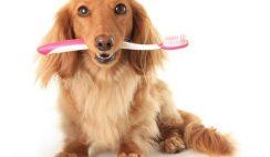 Free Dog Dental Kit from K9 Pearly Whites