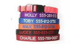 Great Deal: Get Personalized Dog Collars 80% OFF - $4 Each