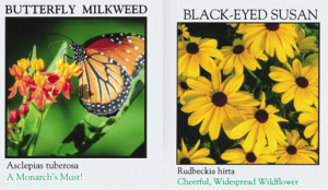 FREE Butterfly and Bee Pollinators Seed Packets