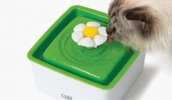 FREE Catit Mini Flower Fountain to Product Test