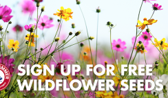 FREE Wildflower Seeds From Arm & Hammer