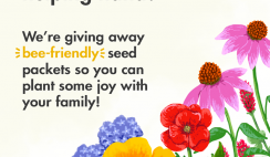 Free Bee-friendly Seed Packets - for first 1,000