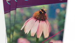 FREE Packet of Flower Seeds from Bayer and The Feed A Bee Initiative!