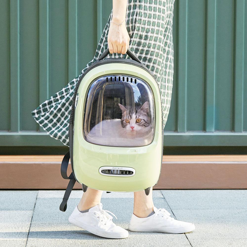 breezy cat
