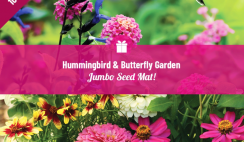Win 1 of 10 FREE Hummingbird & Butterfly Garden Seed Mats from Holland Bulb Farms - ends 8/24