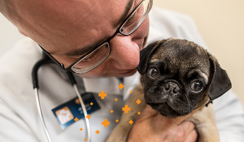FREE Banfield Pet Hospital Office Visit and Consultation