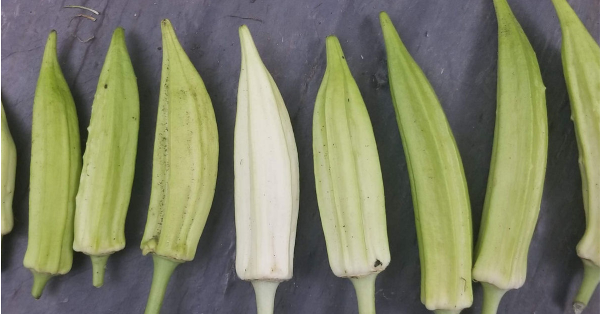 FREE Packet of Okra Seeds And More