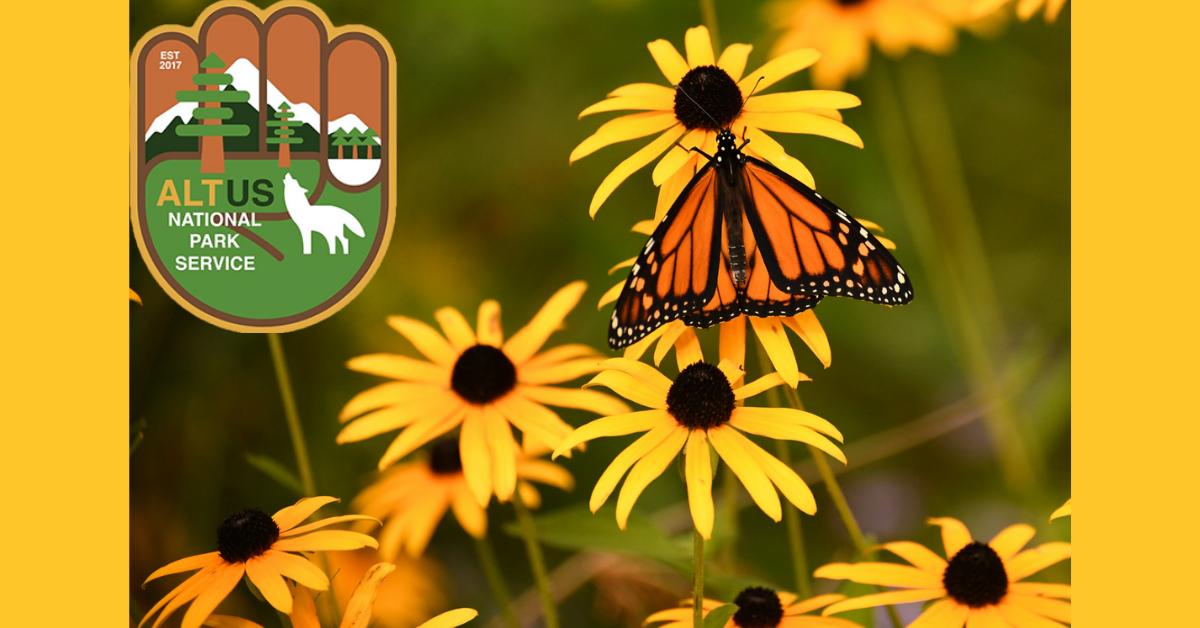 FREE Pollinator Seed Packs