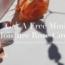 FREE Zinda Beauty Moisture Rose Cuvee Mini Sample