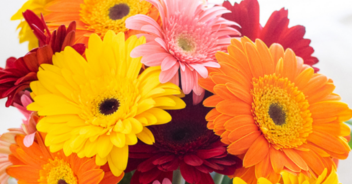 Free Flowers Giveaway