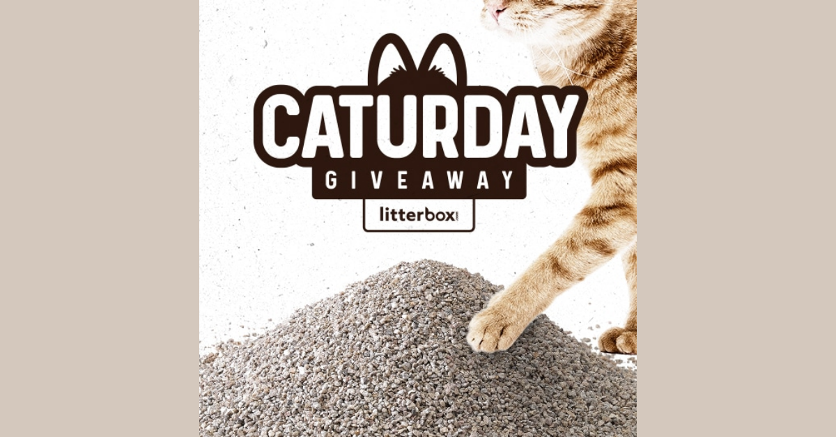 Caturday Giveaway